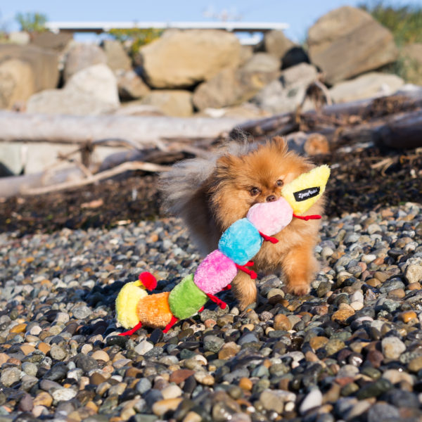 Caterpillar - Large With 6 Squeakers Image Preview 2