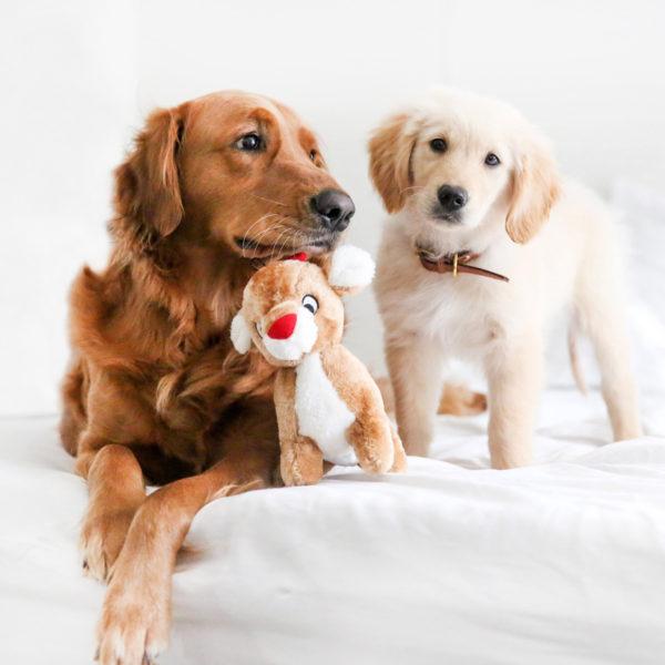 dog reindeer toy