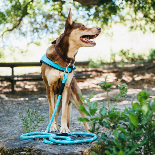 Climbers Dog Leash - ORIGINAL - 4 Feet Image Preview 1