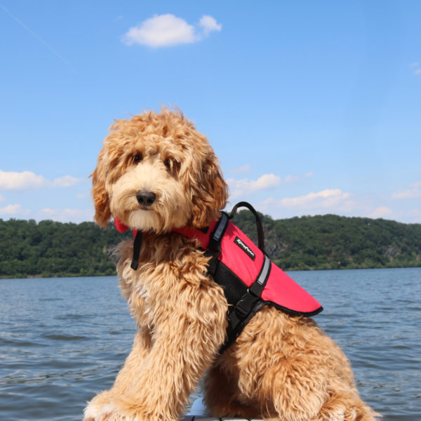 Adventure Life Jacket - Red Image Preview 3