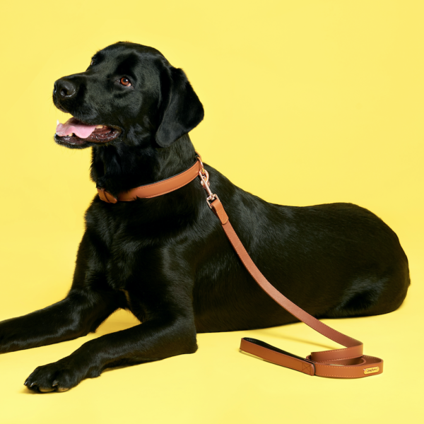 Legacy Collection Leash - Brown Image Preview 1