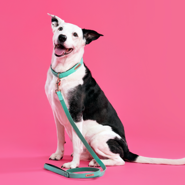 Vivid Collection Leash - Teal Image Preview 1