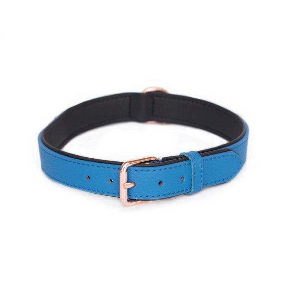 Vivid Collection Collar - Cobalt Image Preview 3