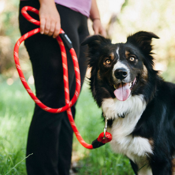 Explore Rope Leash Products