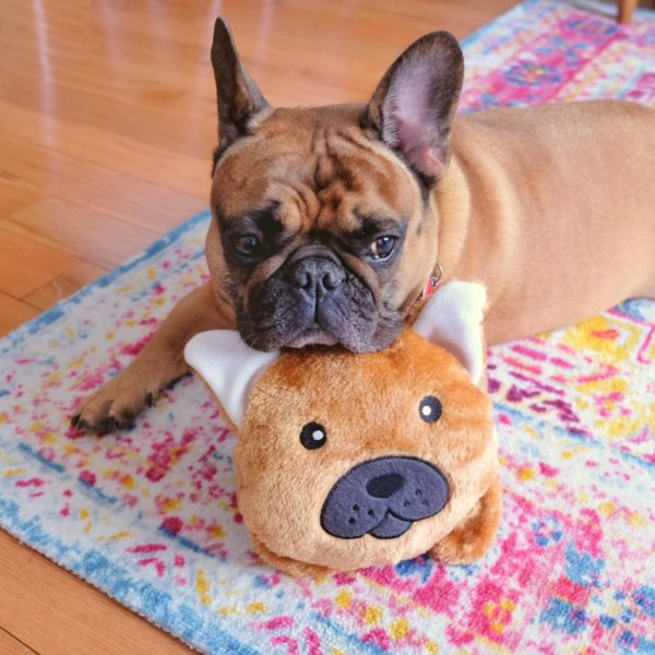 French Bulldog Bun Image Preview 1