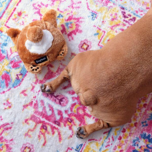 French Bulldog Bun Image Preview 2